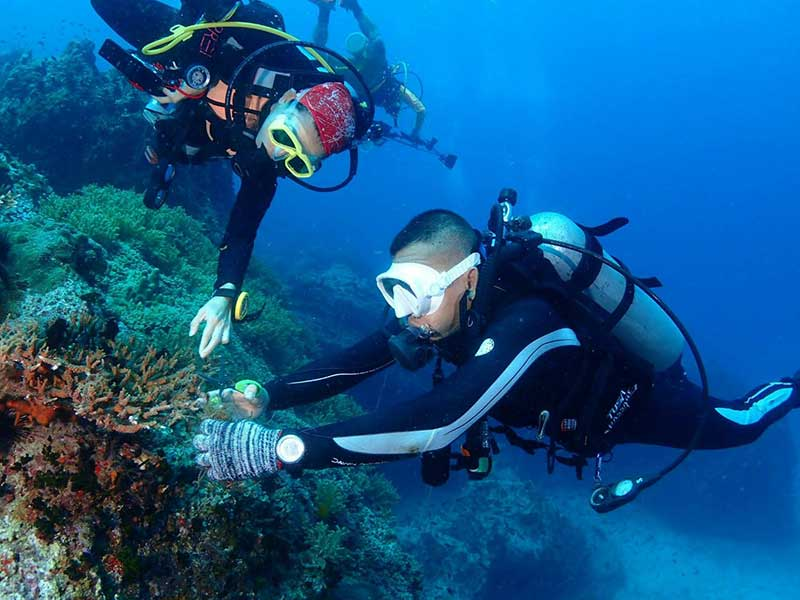 Diving-activities-photo
